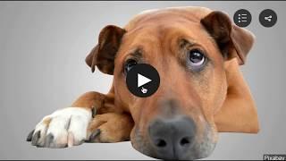 Petsmooch   The New Social Media App for Pets and Animal Lovers