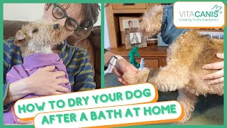 HOW TO DRY YOUR DOG AFTER A BATH AT HOME  2 METHODS YOU CAN USE AT HOME TO DRY YOUR DOG + PRO TIPS