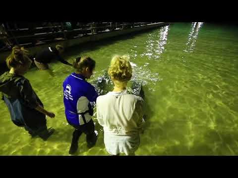 Tangalooma Island Resort   Tangalooma Island Resort Dolphin Feeding Tour   Experience Oz