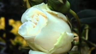 Harmonica「Sweet Memories」2