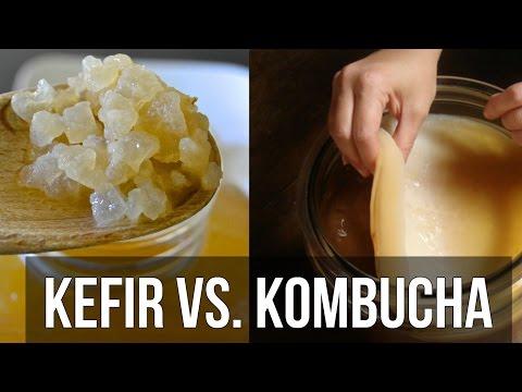 Kombucha   Recipe for Weight Loss or Total Myth? - Thomas DeLauer