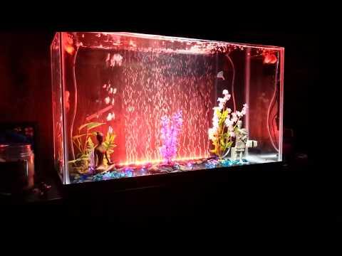 LED Bubble Wall In My Goldfish Aquarium