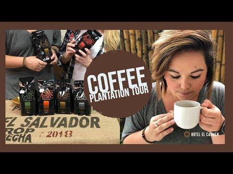 El Salvador Coffee Plantation - How Its Made