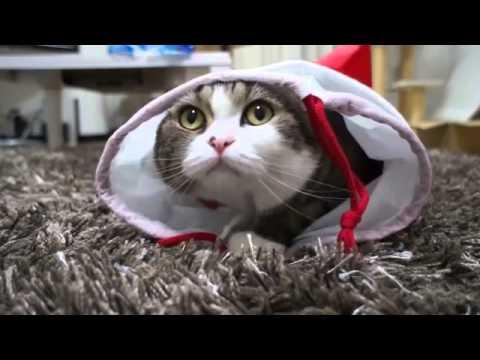 cat,funny cats