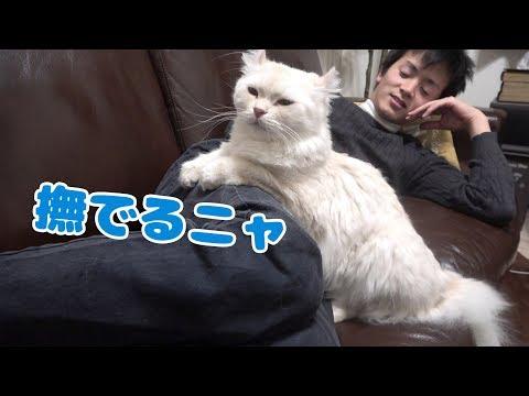 猫のくつろぎ方が贅沢すぎるwww