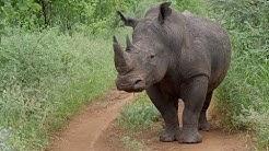 """The Special Northern Five Species""- Amazing Wildlife Safari in Meru National Park, Kenya 2018 (4K)"