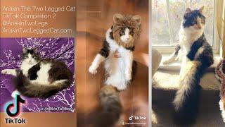Anakin The Two Legged Cat TikTok Compilation 2