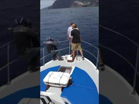 Madeira Balancal Tuna Fish