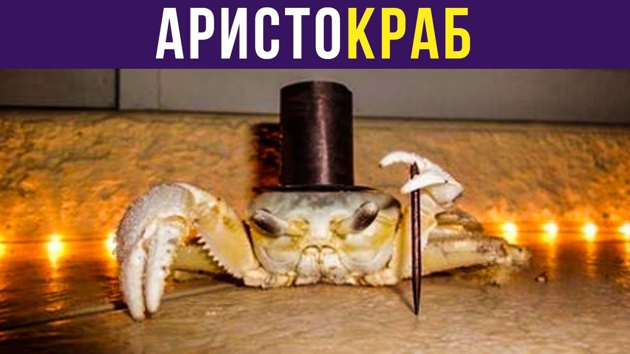 Приколы. АРИСТОКРАБ | Мемозг #229 MyTub.uz