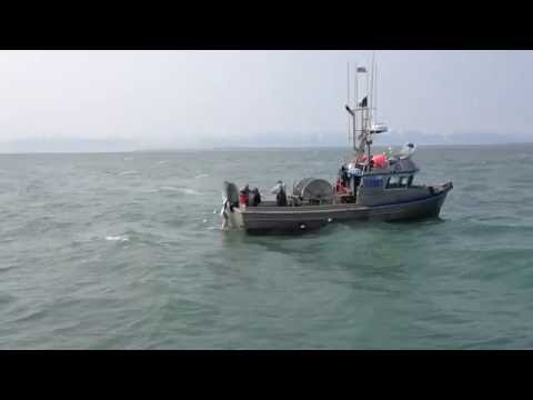 Cook Inlet Alaska Drift Fishing Boat 'Heritage' Catches Tons of Fish
