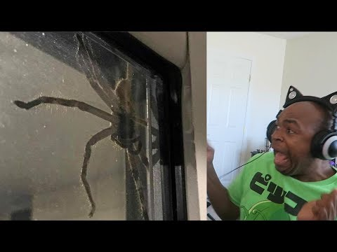 try not to get scared challenge HUGE BUG EDITION!!!