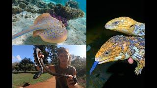 Ningaloo Reef, Tiger Snakes & Shingleback Lizards!