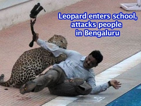 FULL VIDEO: Leopard enters Bengaluru school, attacks people | VIDEO