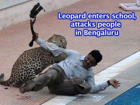 FULL VIDEO: Leopard enters Bengaluru school, attacks people | VIDEO