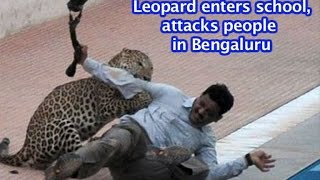FULL VIDEO: Leopard enters Bengaluru school, attacks people   VIDEO