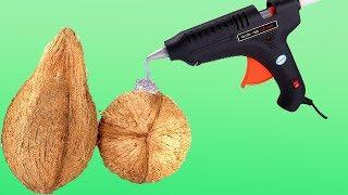 Glue Gun Vs  Coconut