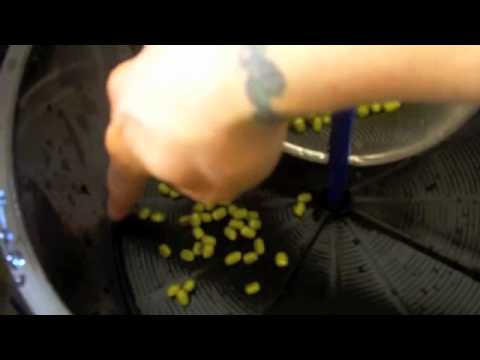 Perfect Sprouts Every TIme In The Freshlife Automatic Sprouter Part 1