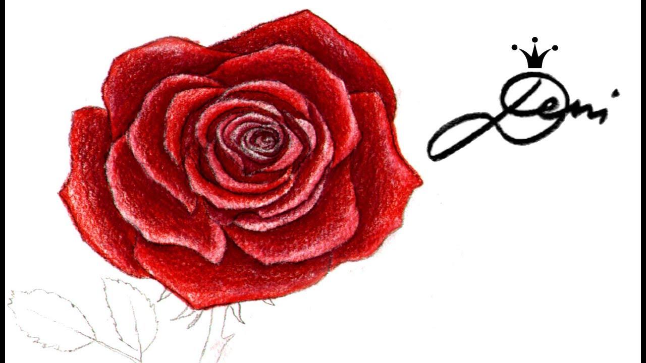 Einfach rosen malen Rosen Bilder