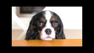 Смешное видео с виноватыми собаками.