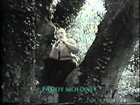 Paddy Moloney - Ar Eirinn Ní Neosfainn Cé hÍ