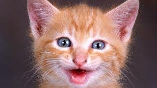 #365. Кошки (В мире животных)