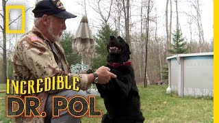 Animal Update: Allie the Dog | The Incredible Dr. Pol