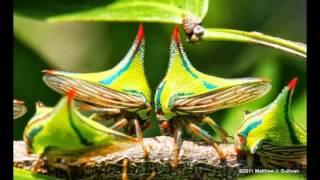 самые необычные животные в мире фото