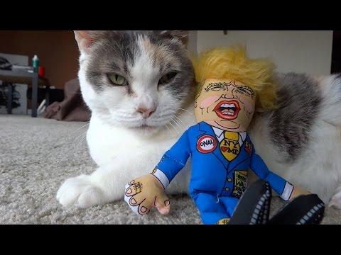 Cat DESTROYS U.S. President Donald Trump