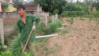 Cuốc đất trong vườn chuẩn bị trồng rau cải