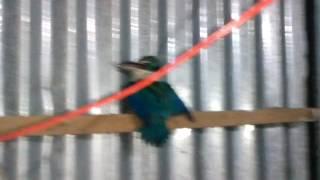 hát karaoke,chim vào nhà luôn nè