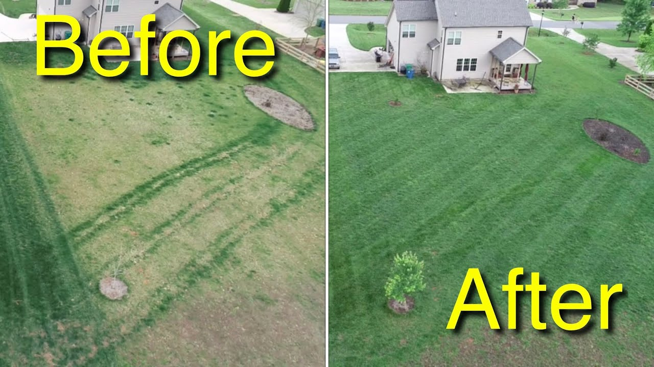 Before And After Fertilizer Results Mowing My Neighbors Deep Gr