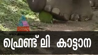 Friendly wild elephant in Wayanad | Maniyan elephant