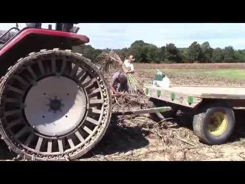Making Sorghum in Kentucky: Start to Finish