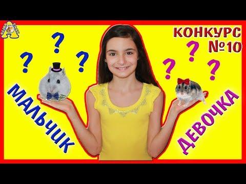 Как определить хомяка мальчик или девочка джунгарик