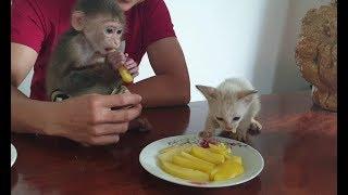 Baby Monkey | Doo And Cat Miu Eat Potatoes