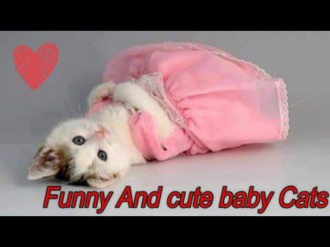 أجمل المقاطع لأجمل وأطرف القطط الصغيرة  Funny And Cute Baby Cats