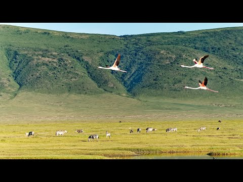Ngorongoro Crater & Conservation Area, Tanzania in 4K Ultra HD