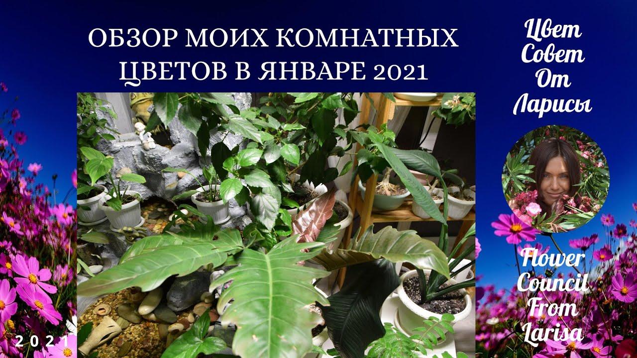 ОБЗОР МОИХ КОМНАТНЫХ РАСТЕНИЙ В ЯНВАРЕ 4К