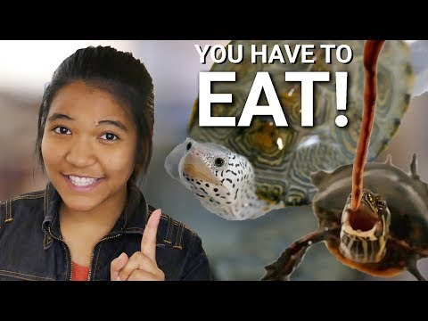 TURTLE ISN'T EATING?!? | How To Get Your Turtle To Eat Pellets