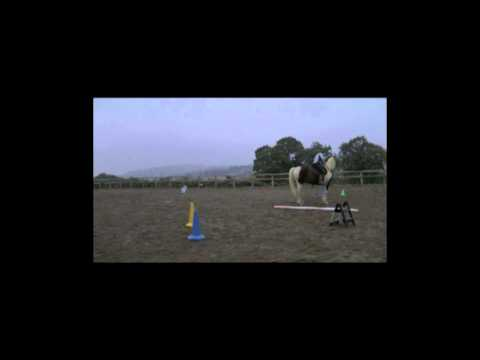 Clicker Training A Young Horse Under Saddle