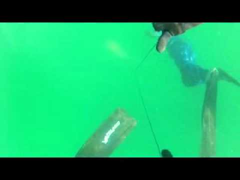 Spearfishing Shark Bay