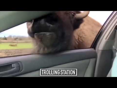 Свежие Приколы 2016 Funny Videos 2016