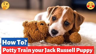 6 Killer Tips for House Training a Jack Russell puppy (Implement These NOW)
