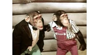 """Детский фильм """"Новые приключения Дони и Микки"""" снят в 1973 году"""
