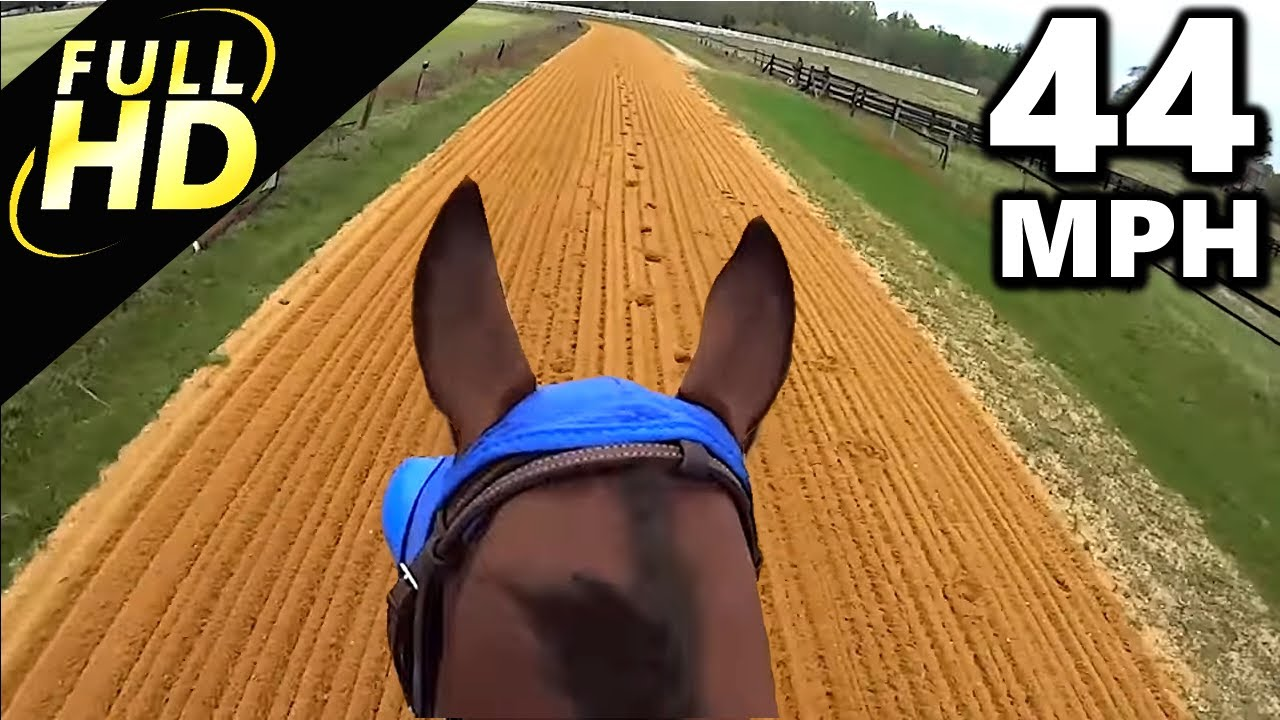 Jockey Cam Horse FAST Galloping 44mph GoPro