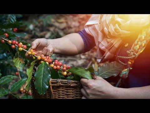 Women in Coffee 2020: il nuovo capitolo in Honduras
