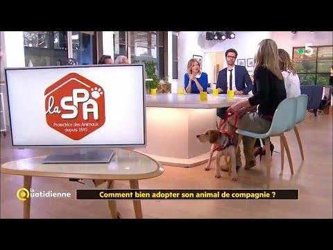 Comment Bien Adopter Son Animal De Compagnie ?