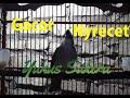Trucukan Gacor Isian Nyrecet Gereja Mantab  Mp3 - Mp4 Download