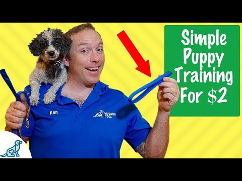 Puppy Training Basics - Simple $2 Puppy Training Tricks - Professional Dog Training Tips
