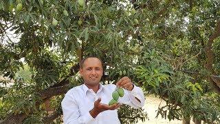 Video Aam Aur Pyaz ki Chutney | Mango Chutney Recipe | Green Mango Onion Chutney | Village Food Secrets download MP3, 3GP, MP4, WEBM, AVI, FLV Juni 2018